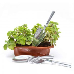MOTHER'S DAY AJWAIN PLANT WITH TOOLS