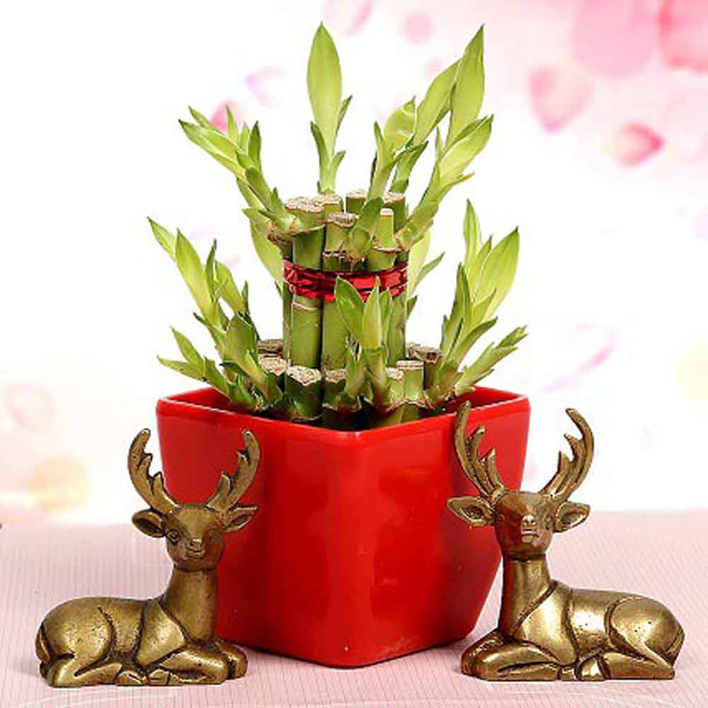 Mothers Day Lucky Bamboo With Deers