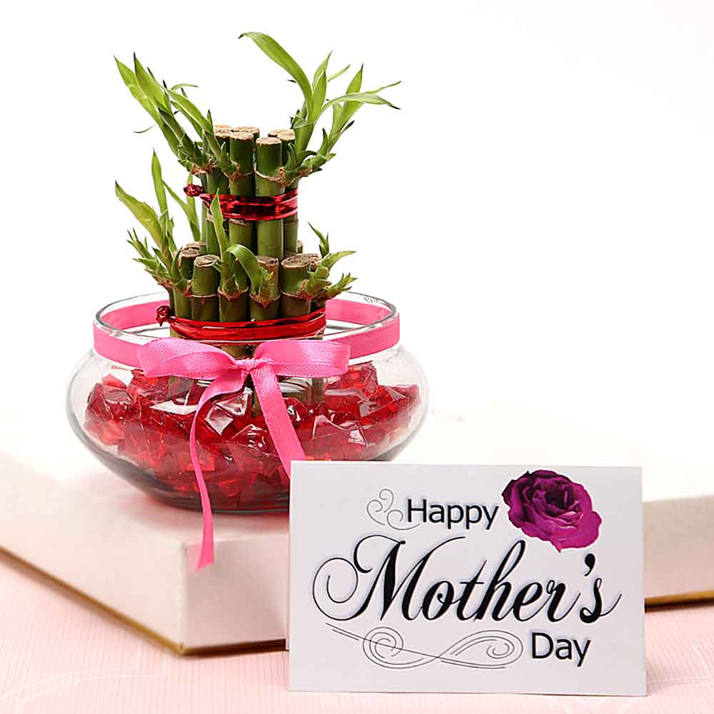 Plants-Mothers Day Greet Mommy With Luck