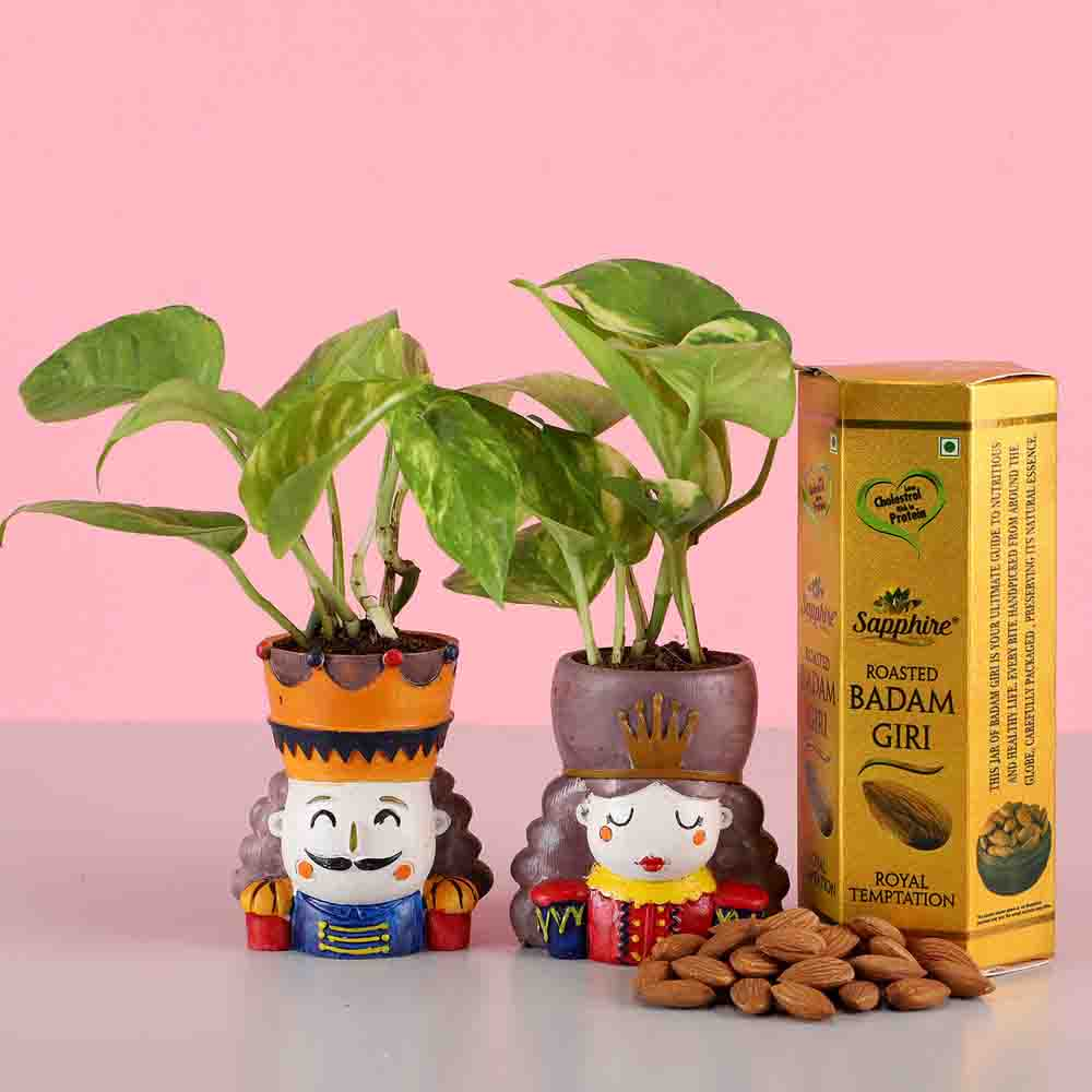 Money Plant Set & Roasted Almonds
