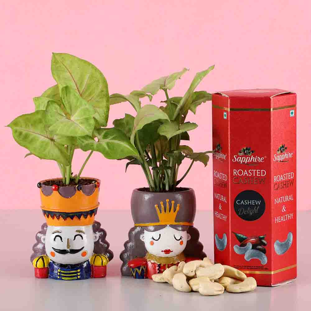 Syngonium Plant Set & Roasted Cashews