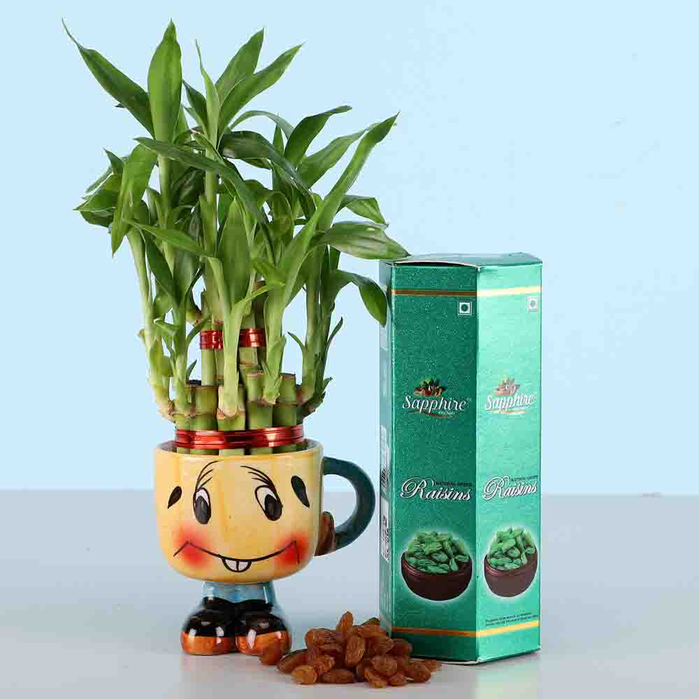 Raisins & 2 Layer Lucky Bamboo Plant
