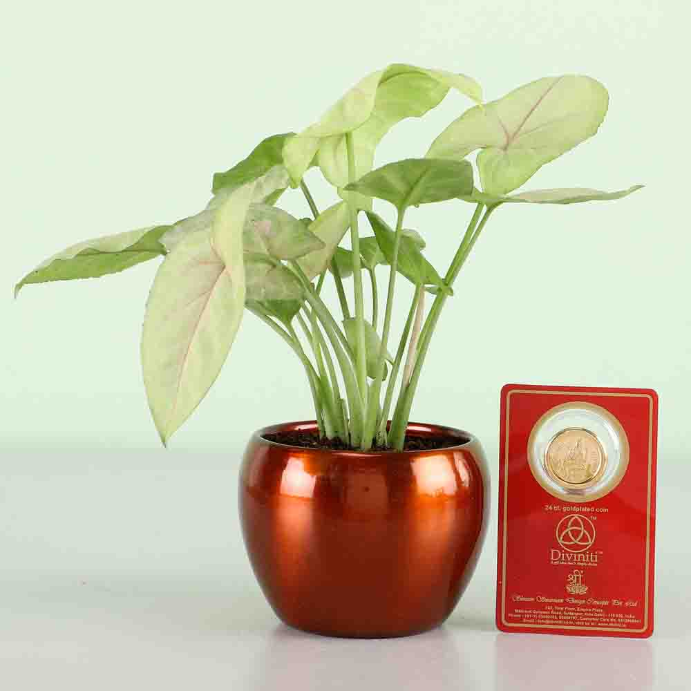 Syngonium Plant & Gold Plated Coin