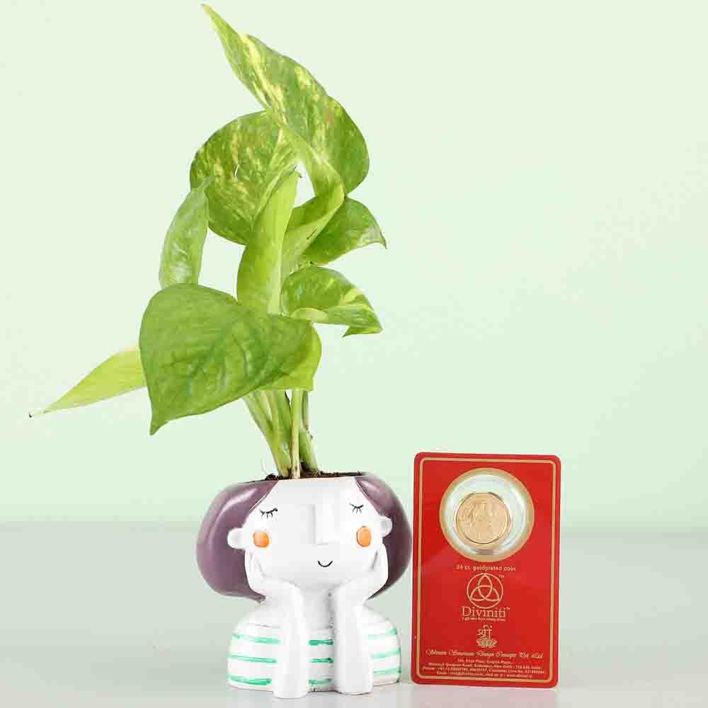 Money Plant & Gold Plated Coin