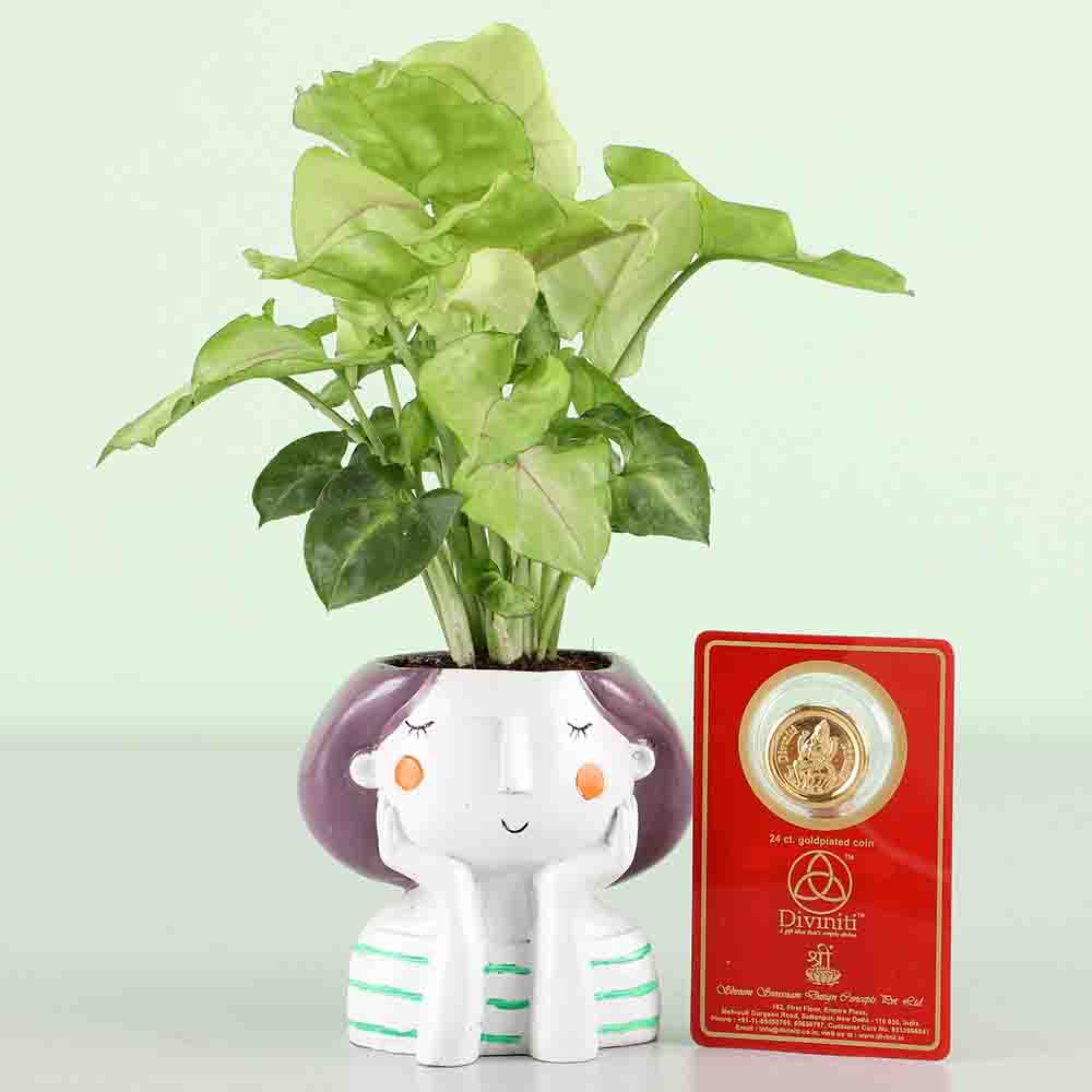 Free Gold Plated Coin With Syngonium Plant