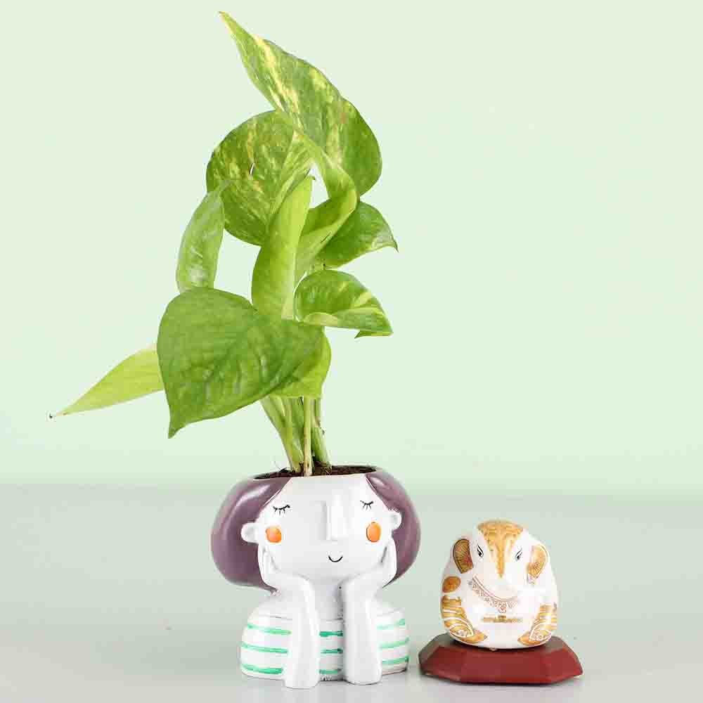 Money Plant & White Ganesha Idol Combo