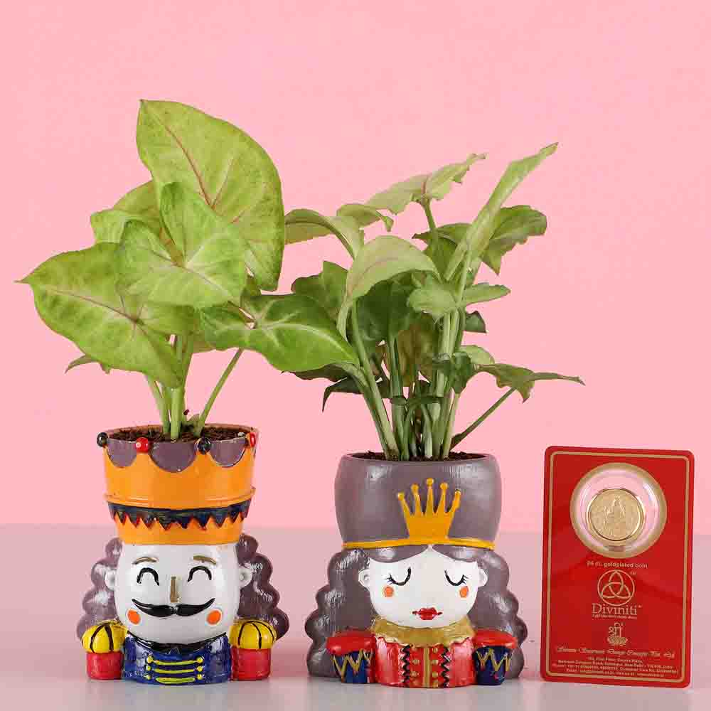 Syngonium Plant Set & Gold Plated Coin