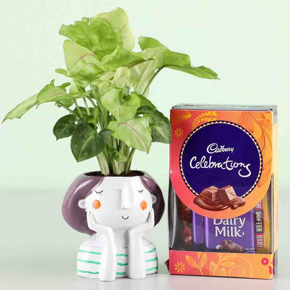 Syngonium Plant & Cadbury Celebrations