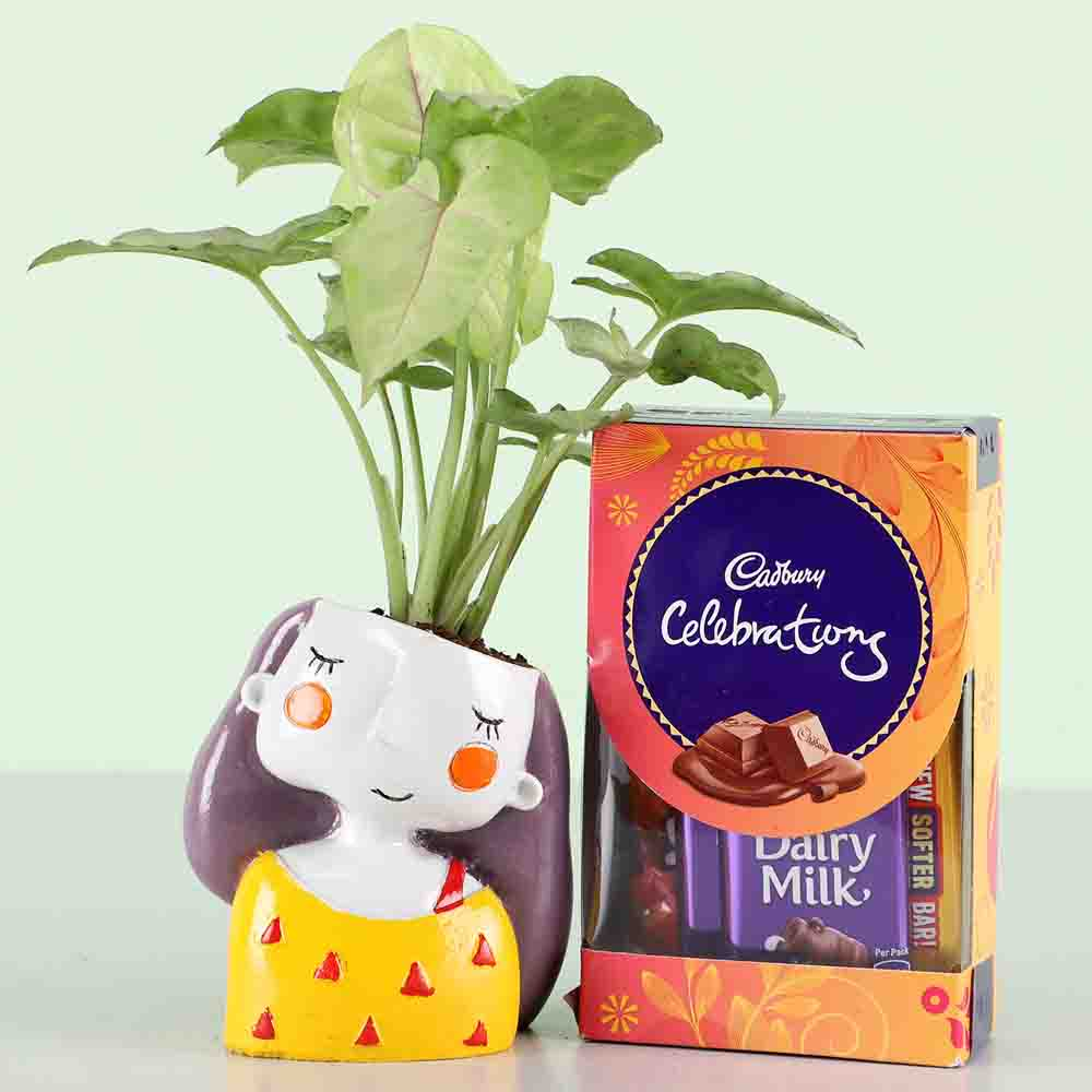 Cadbury Celebrations & Syngonium Plant