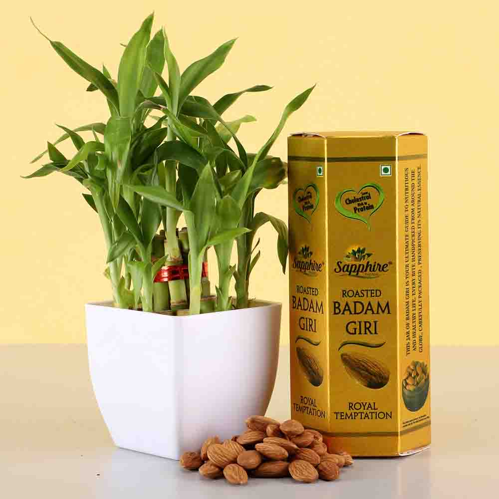 2 Layer Lucky Bamboo & Roasted Badam