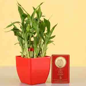 Diwali Hampers-2 Layer Lucky Bamboo With Free Gold Plated Coin