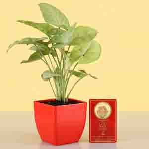 Diwali Hampers-Free Gold Plated Coin & Money Plant