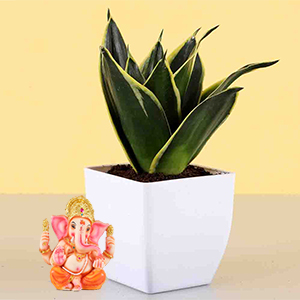 Diwali Hampers-2 Layer Lucky Bamboo With Free Laxmi Ganesh Coin