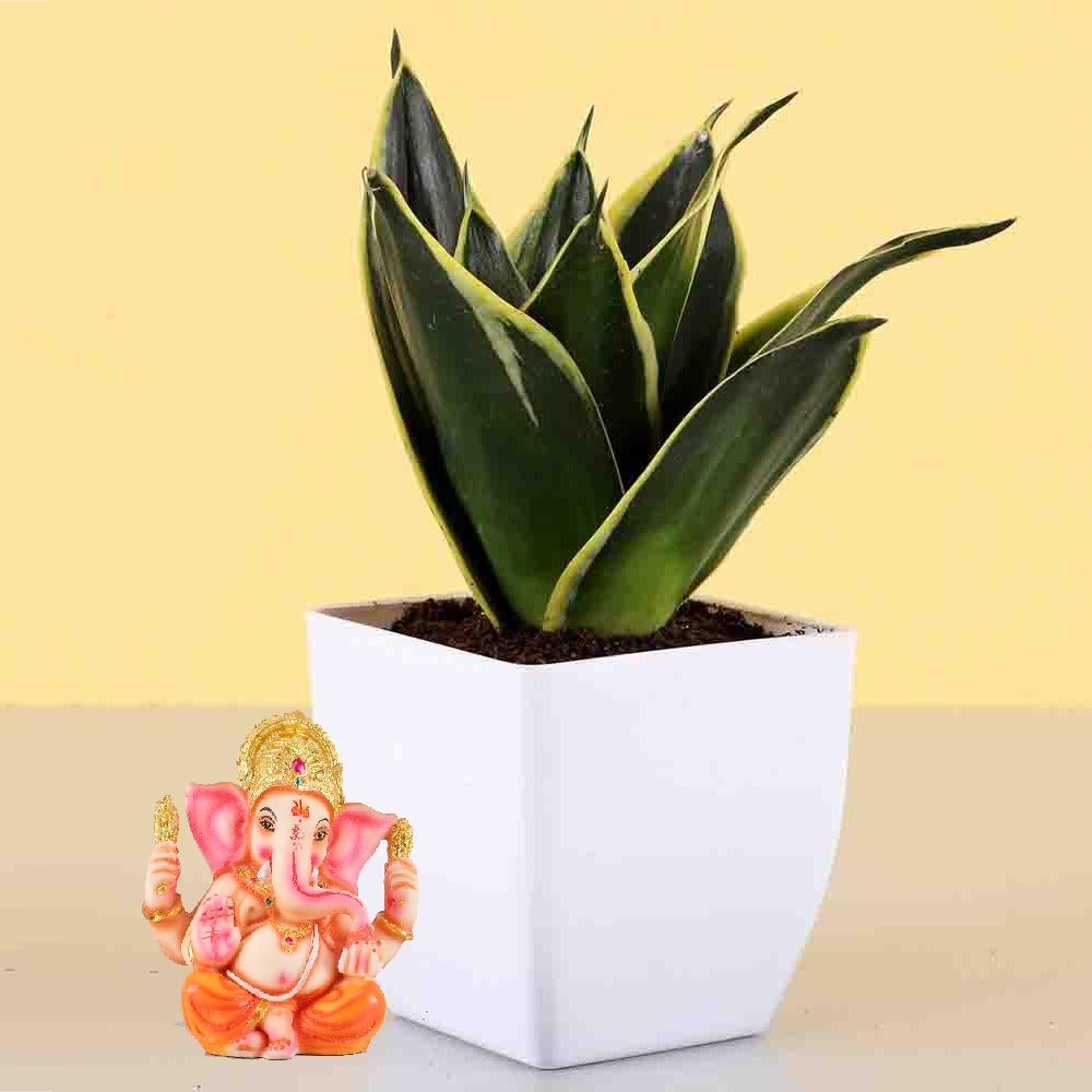 View 2 Layer Lucky Bamboo With Free Laxmi Ganesh Coin