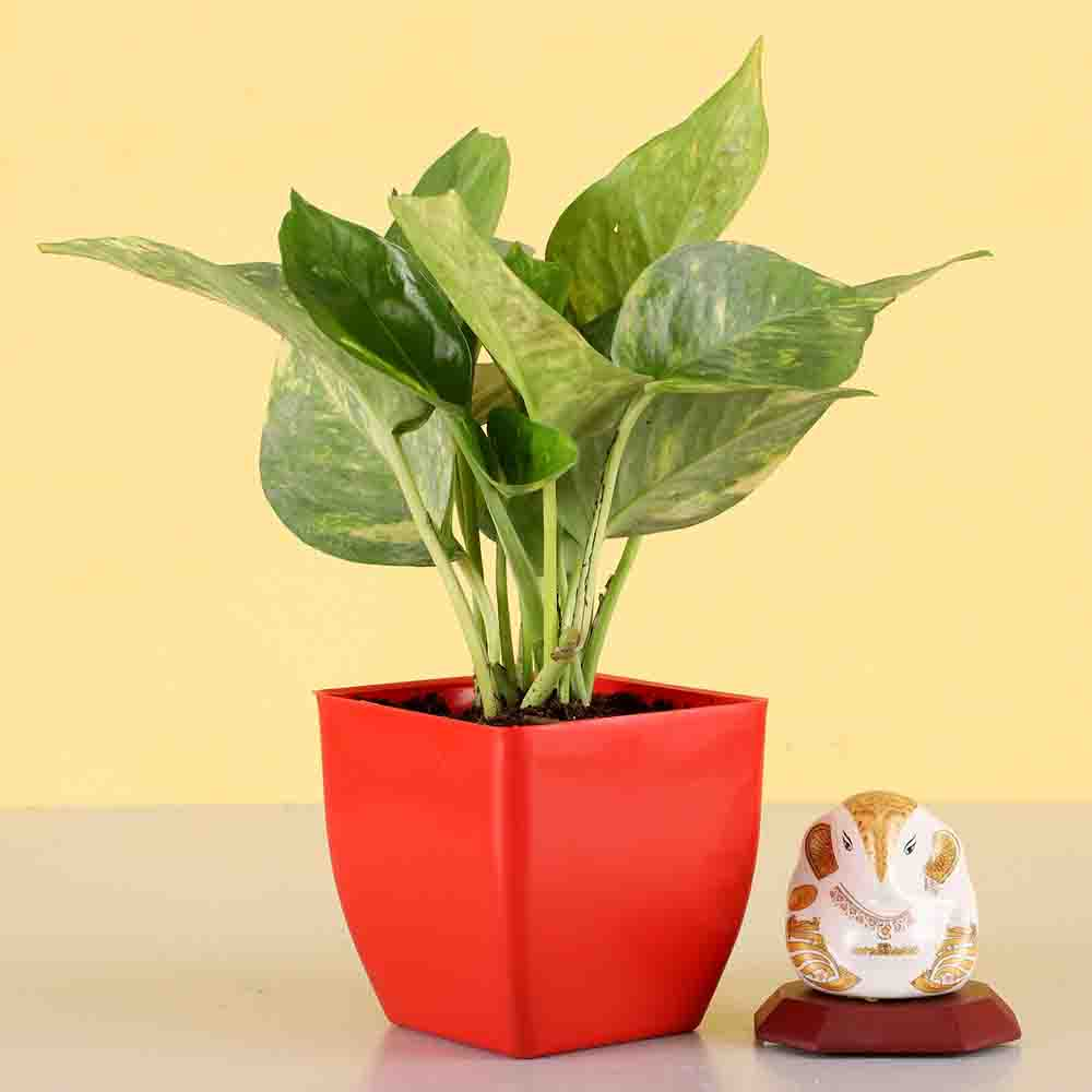Money Plant With Ganesha Idol