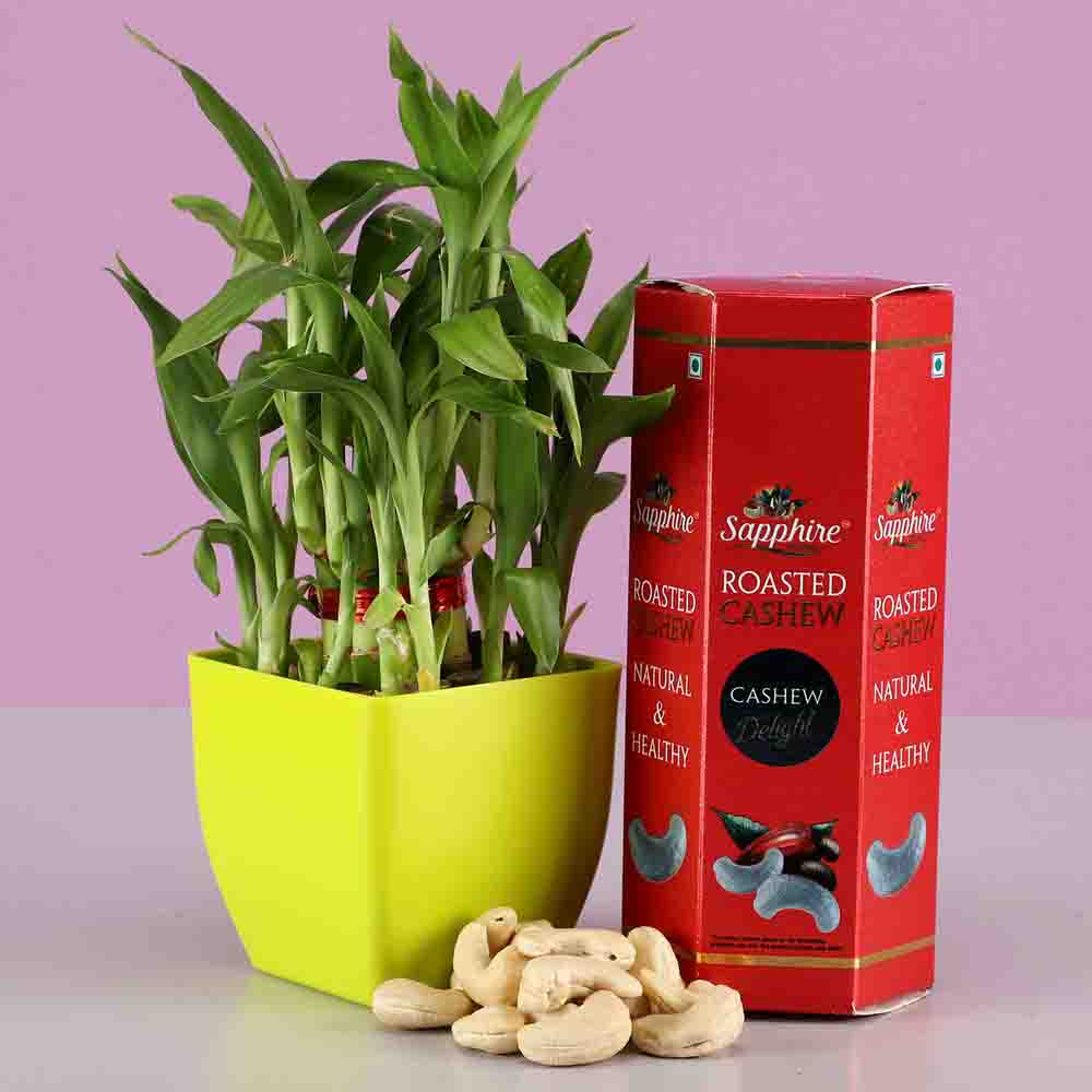 Diwali Hampers-2 Layer Bamboo Plant & Roasted Cashew