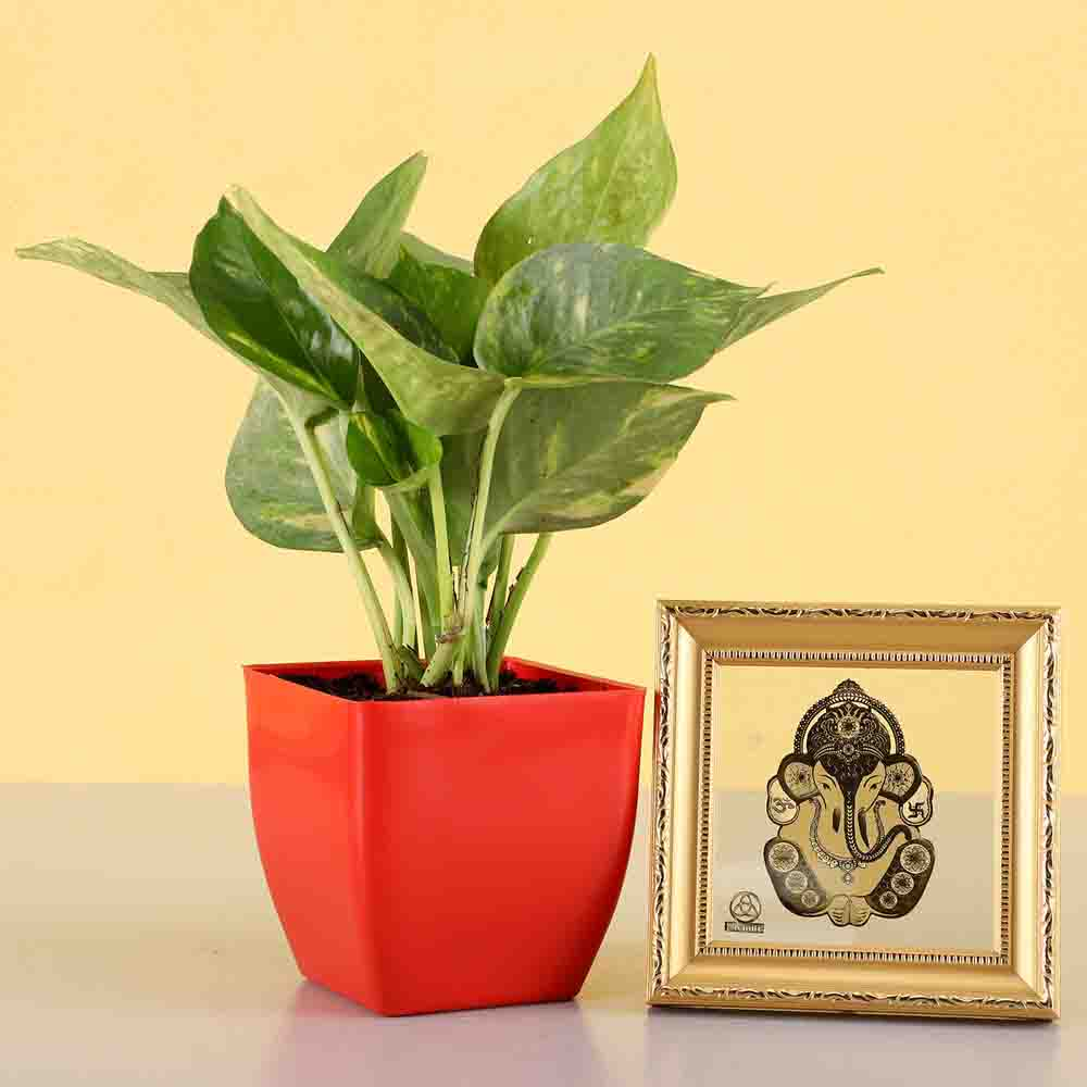 2 Layer Lucky Bamboo With Ganesha Frame