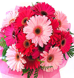 Fresh Flowers-Bright Pink Blooms