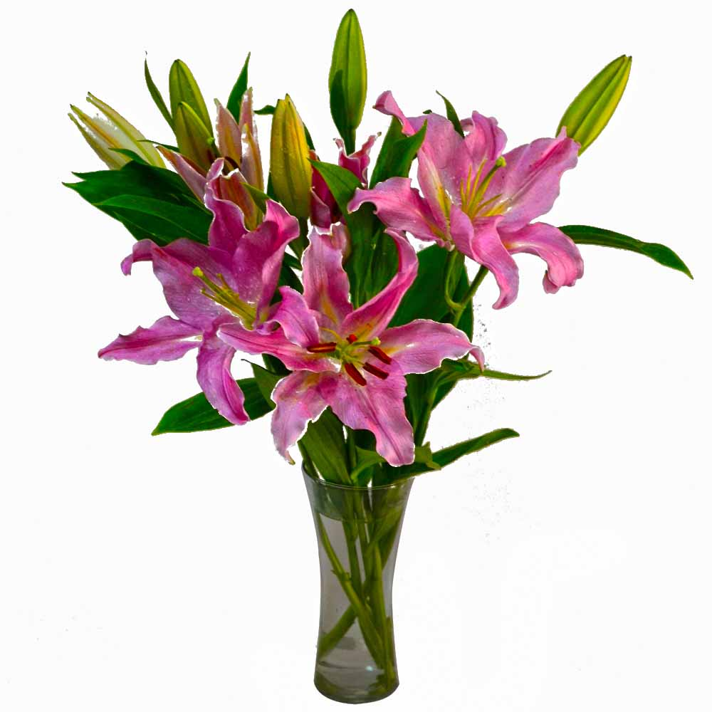 Glass Vase of Pink Lilies