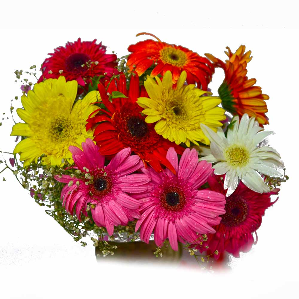 Gerberas-Ten Mix Colour Gerberas Bouquet