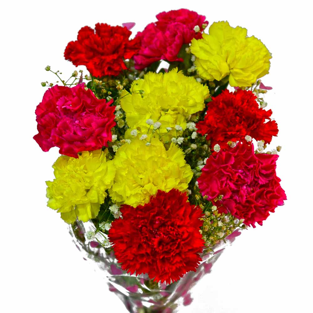 Carnations-Bouquet of Ten Fresh Carnations