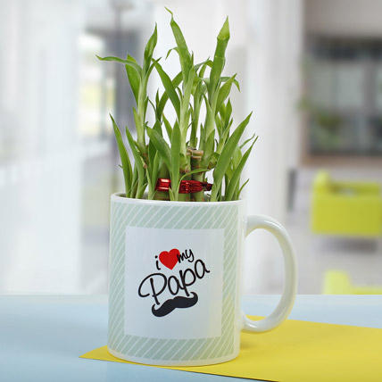 Plants-Bamboo In A Mug