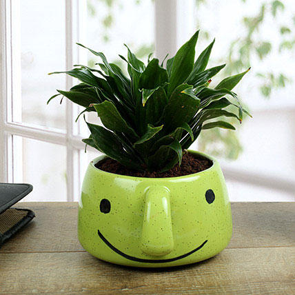 Dracaena Compacta In Smiley Vase