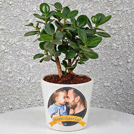 Miscellaneous-Ficus Compacta In Personalized Pot