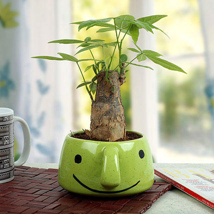 Plants-Pachira Bonsai In Smiley Vase