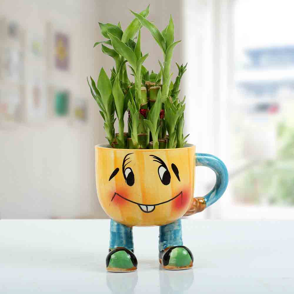 Plants-Two Layer Bamboo Plant With Smiley Vase
