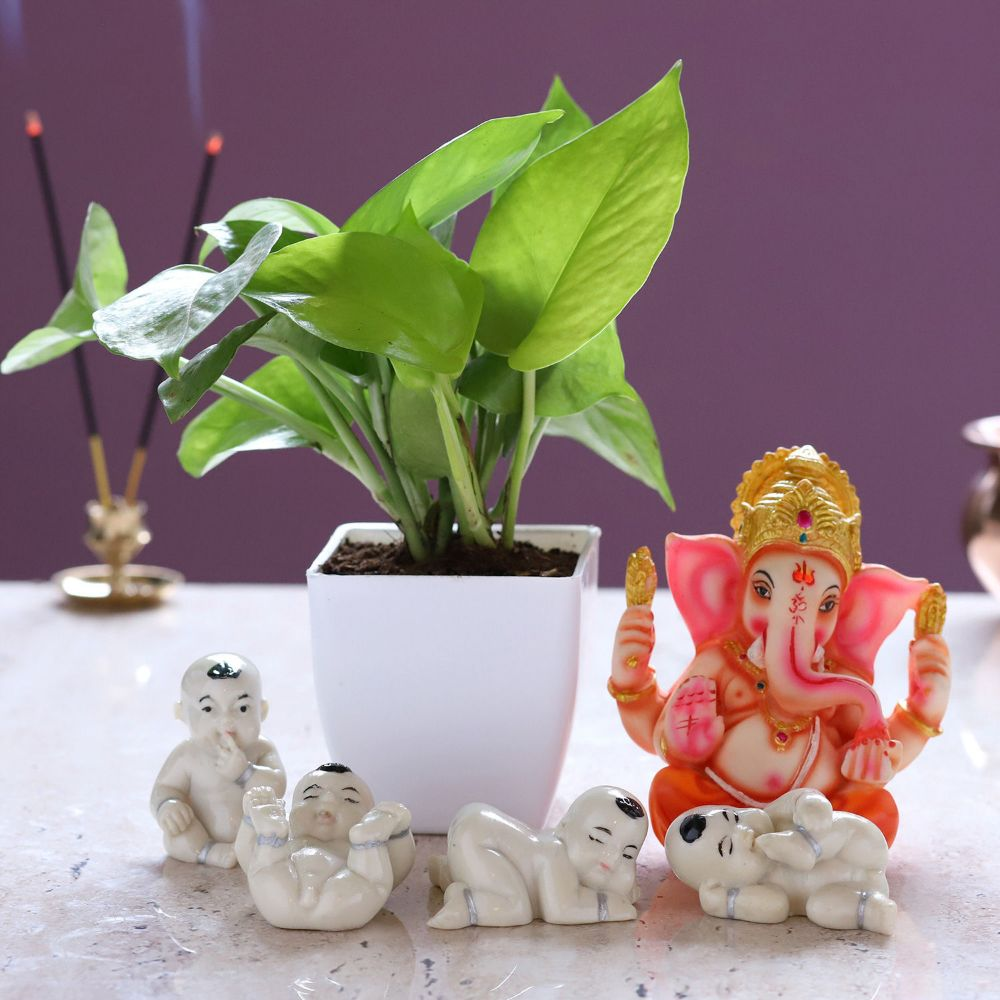 Money Plant With Ganesha And Laughing Buddha