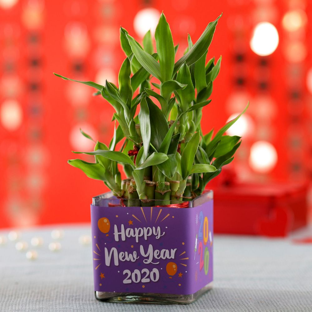 New Year Pot Plant Online