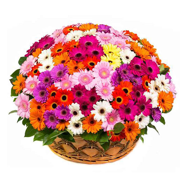 100 mix gerbera basket