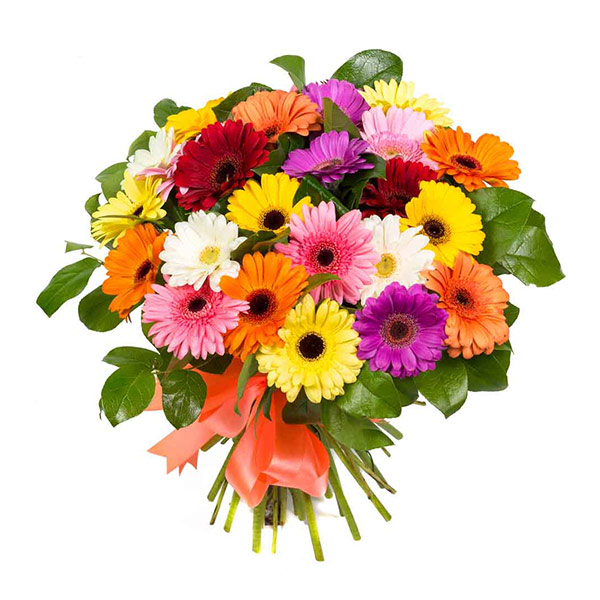 25 mix gerbera bunch