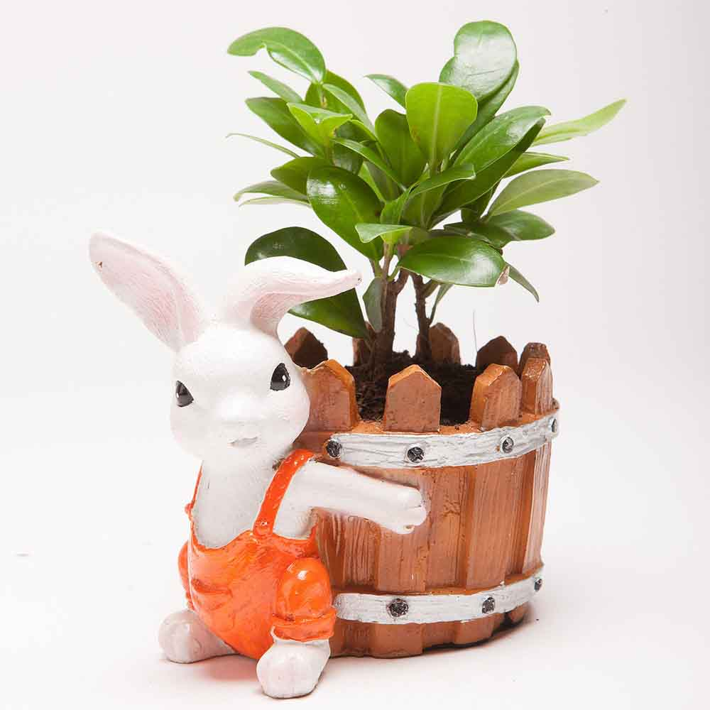 Ficus Compacta Plant in Resin Rabbit Pot