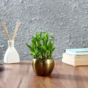 Plants-Two Layer Bamboo Plant in Copper Orchid Metal Pot