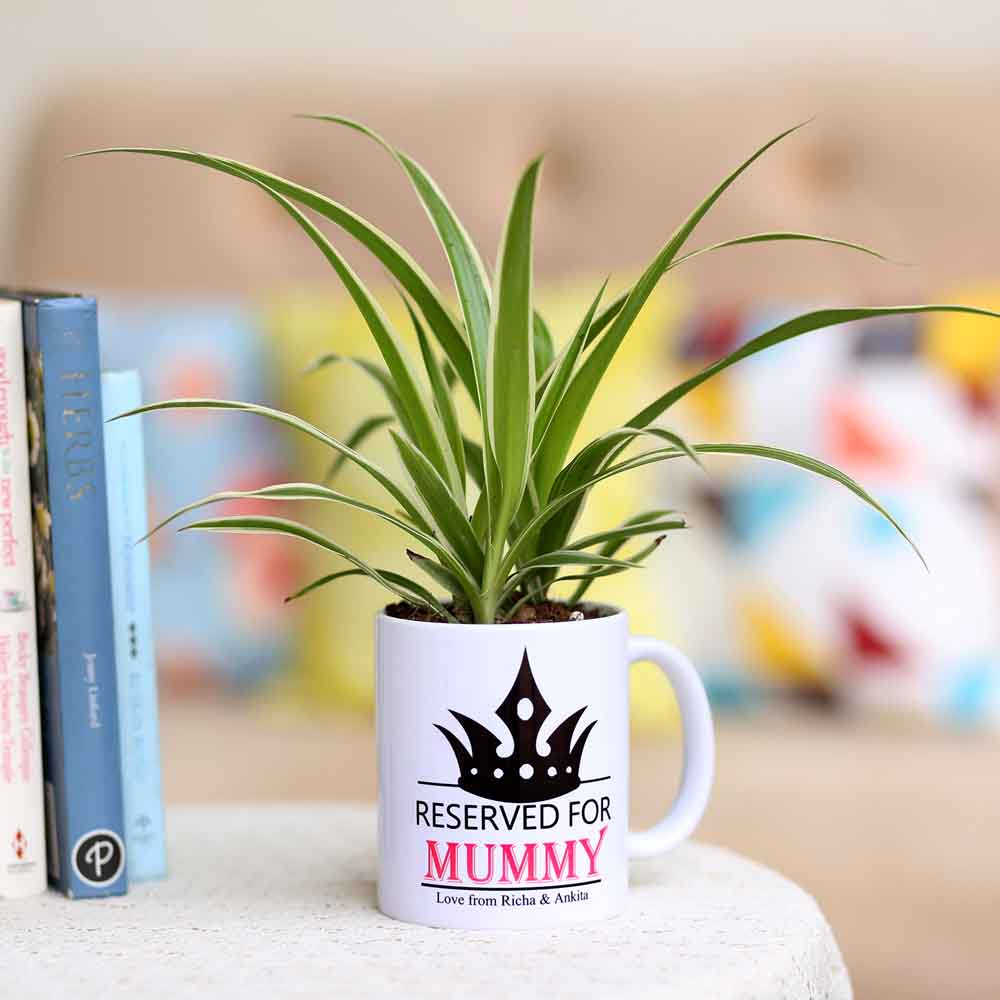 Spider Plant In Personalised Mug For Mummy