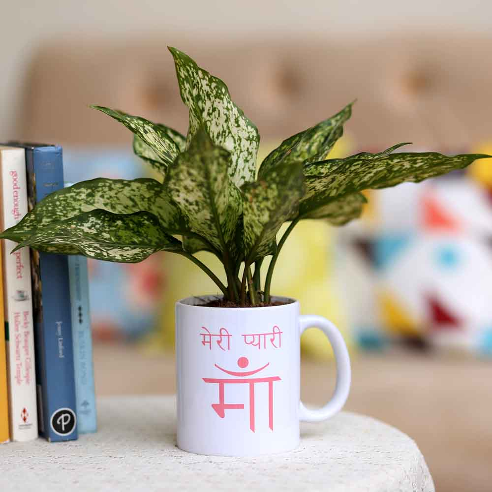 Aglaonema Plant In Meri Pyaari Maa Mug