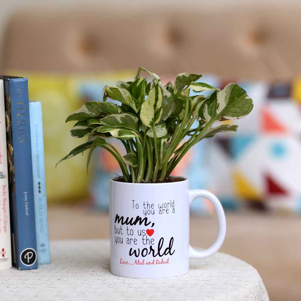 Pothos Plant In Personalised Mug For Mum