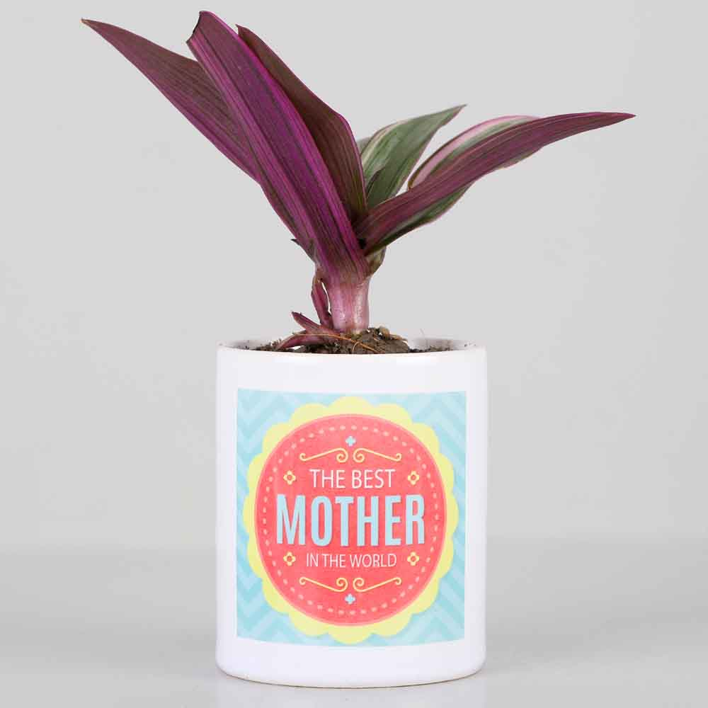Roheo Plant In Best Mother Printed Pot