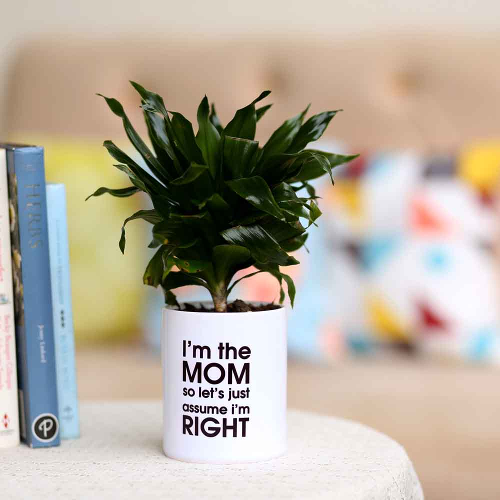 Dracaena Plant In Printed White Pot For Mom
