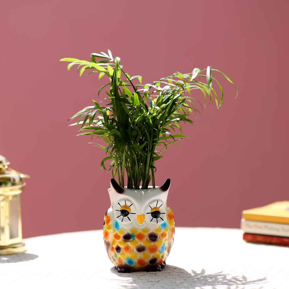 Chamaedorea Plant In Resin Owl Pot