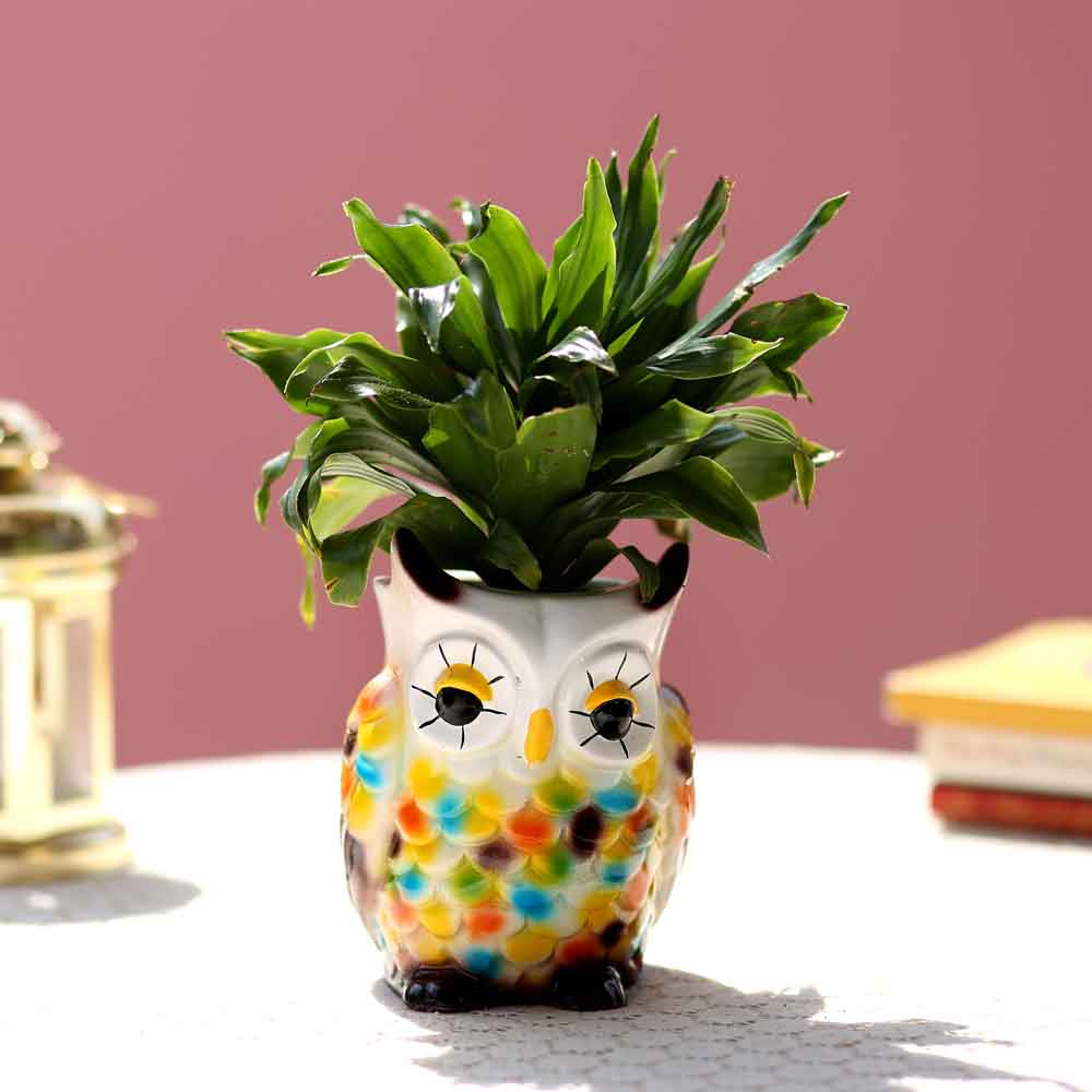 Dracaena Plant In Resin Owl Pot