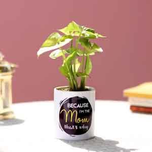 Plants-Syngonium Plant In Printed Pot For Mom