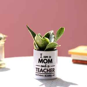 Plants-Milt Sansevieria In Printed Pot For Mom