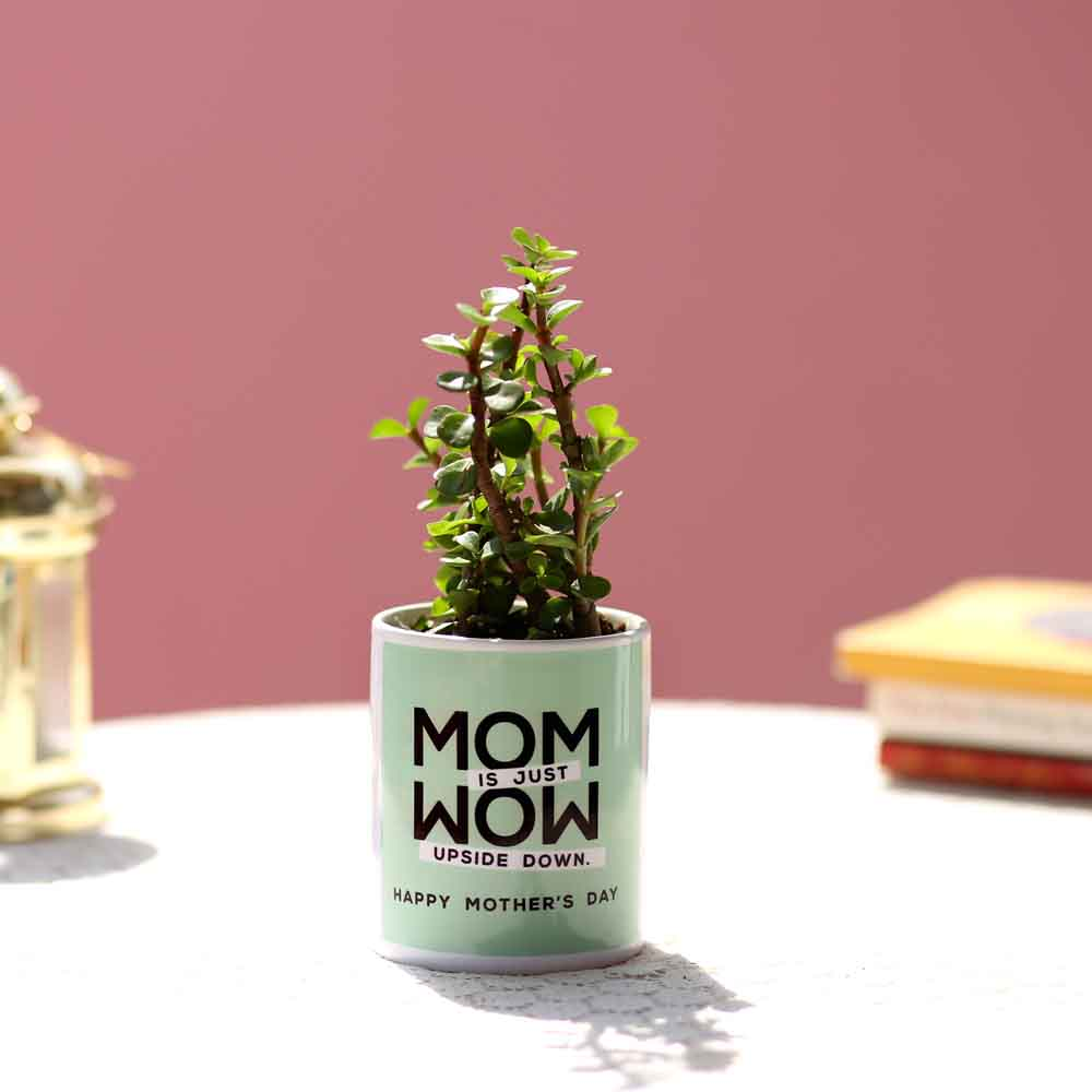Jade Plant In Mom Is Wow Printed Pot