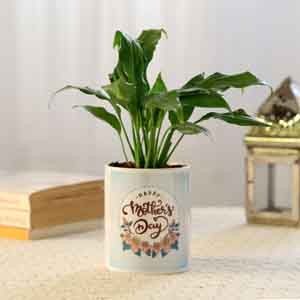 Plants-Peace Lily In Blue Mothers Day Pot