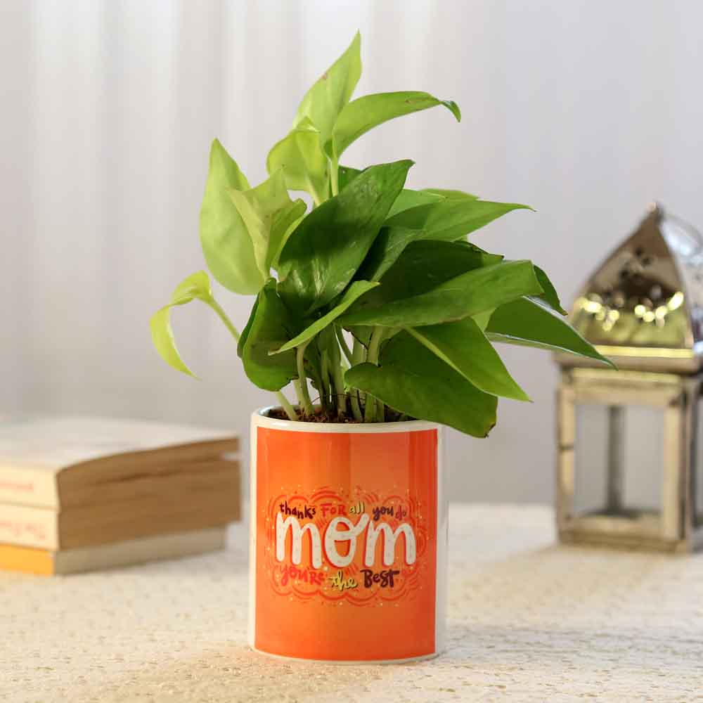 Plants-Prosperous Money Plant For Mom