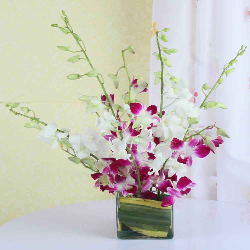 Mixed Orchids For Mothers Day