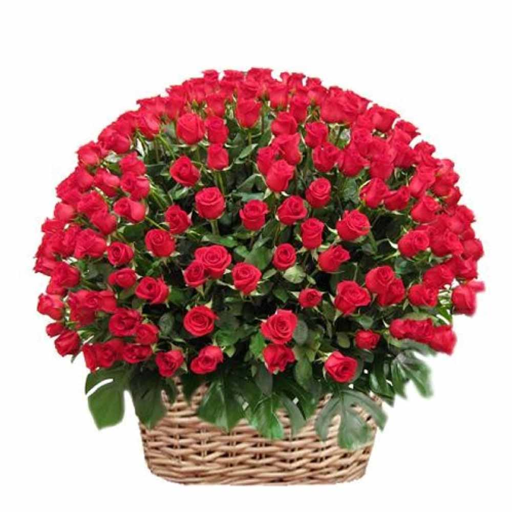 Valentines Day Basket of 100 Red Roses